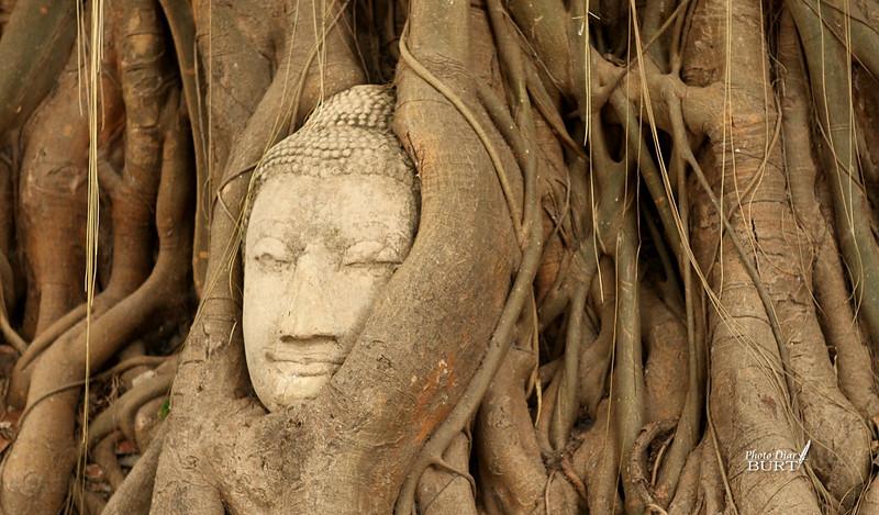 大城瑪哈泰寺裏的佛頭