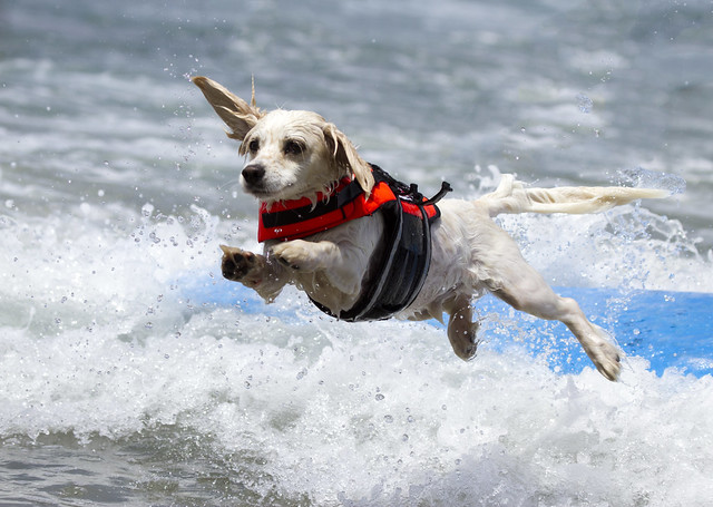 7th annual Dog Surfing Competition san diego