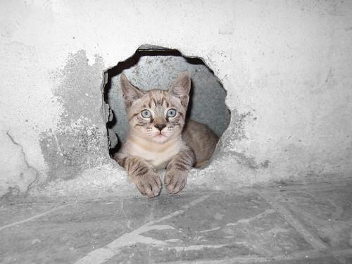 Gato posando by Loli Calatayud