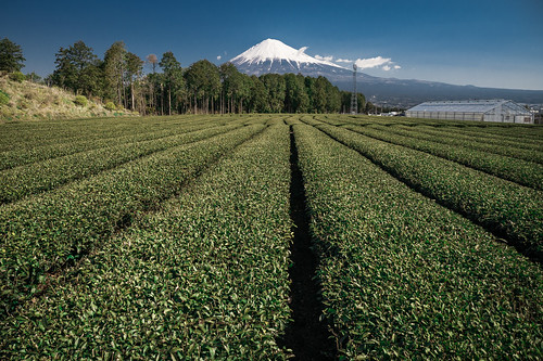 japan bluesky fujisan shizuoka mtfuji fujinomiya teaplant