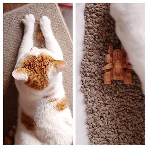 ホワイトベース #cat #猫 #オッドアイ君