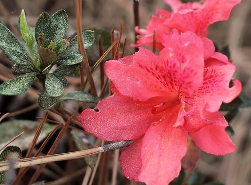 Pollen_2012_09