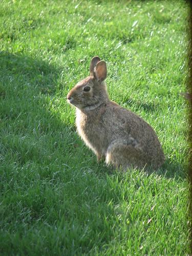 Spring Bunny 005