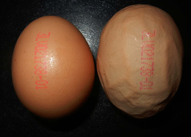Яйца мужские фото 29461 фотография