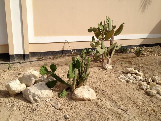vandalized cactus plant