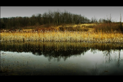 ohio reflection wetland mansfield gormannaturecenter