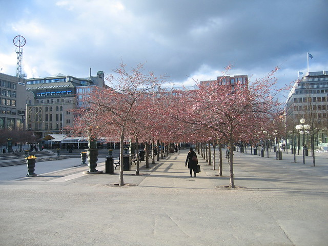Stockholm by Andrea Gerak: Cherry blossoms