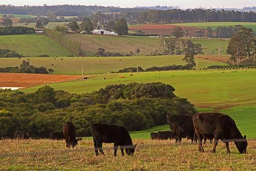 Landscape - farms - taken from Golf links Road near Pemberton