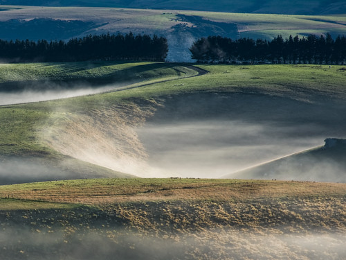 road autumn mist green misty still sheep very small hills fields even though mahinerangi hellooooooooofromagentmedaco