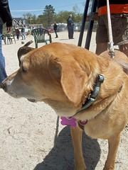 Sophie_dogpark_42912