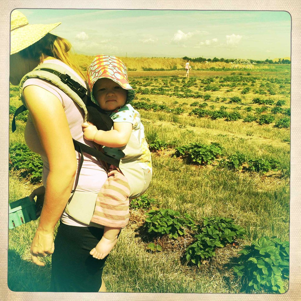 strawberry picking with a baby on my back