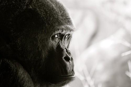 Tokyo 2012 - 上野 - 恩賜上野動物園 (3)