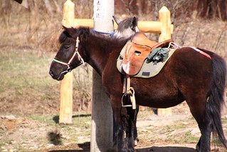 Horse in Zhongchagou