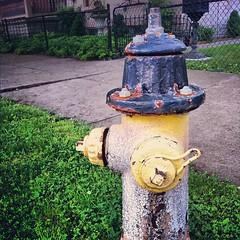 backyard(0.0), water feature(0.0), fountain(0.0), lighting(0.0), garden(1.0), yard(1.0), fire hydrant(1.0),