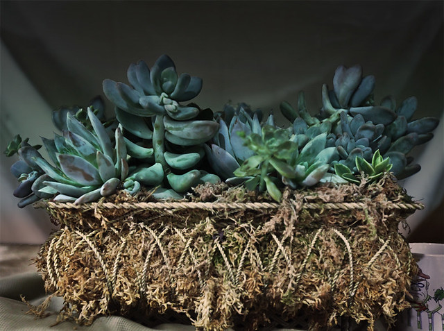 2012_GS_Exhibitors_Bretins_succulent