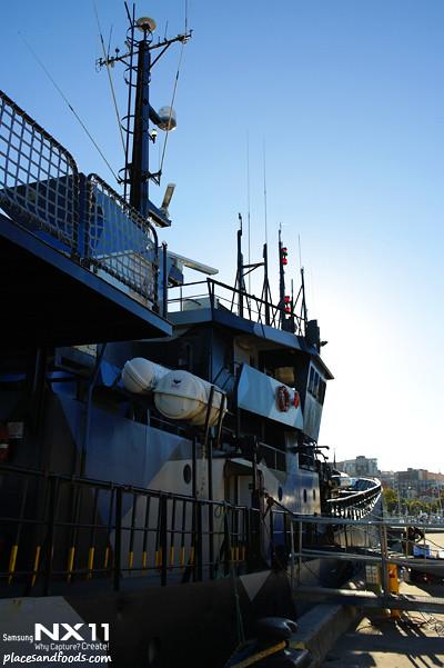 seasheperd ship hobart5