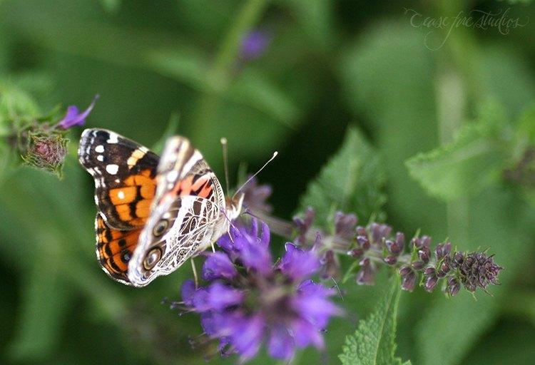 05-16-butterfly1