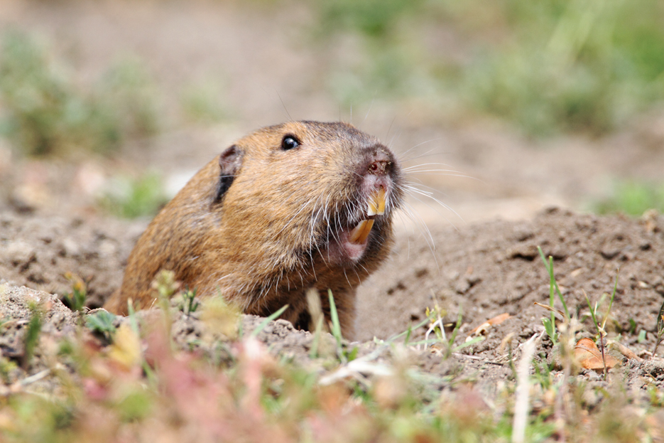 051412_02kenMallory_gopher