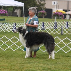 dog agility(0.0), dog sports(1.0), animal sports(1.0), silken windhound(1.0), dog(1.0), sports(1.0), pet(1.0), mammal(1.0), collie(1.0), conformation show(1.0), borzoi(1.0),