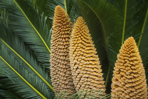 Sabal Palm by erickpineda527