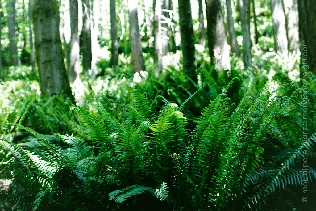 beautiful fern on guemes mountain