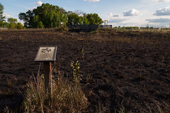 Burned Prairie_5811_5811.jpg by Mully410 * Images