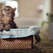 A Fresh Basket of Daisy by torode