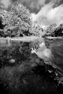 Reflections (B&W)