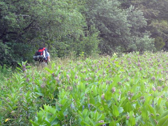 Beginning of Glencliff Trail