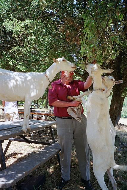 Ya old goat.....