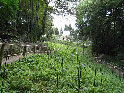 ささゆり園@大神神社-09