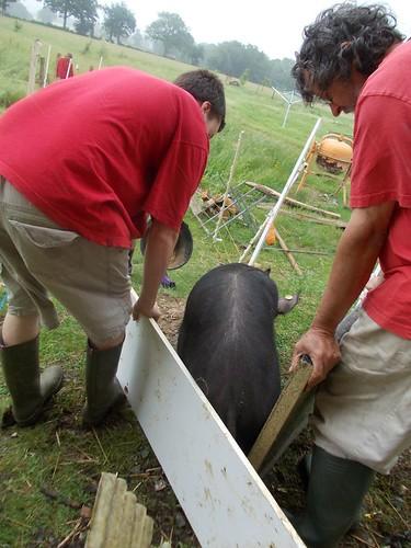 SJDagg 18.6.12 mvf pig pigboards