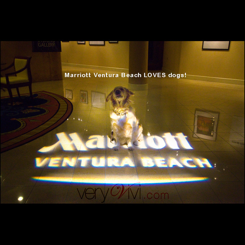 Marriott Ventura Beach Loves Dogs!