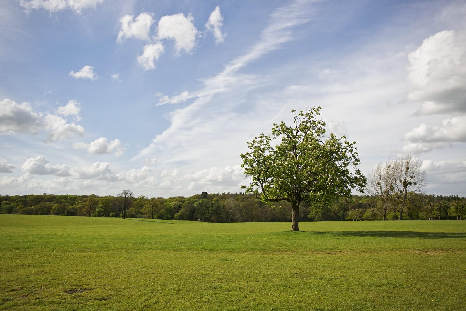 Knebworth Park