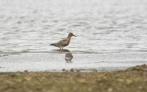 Knot, Meadow Lane GP, 13th May 2016