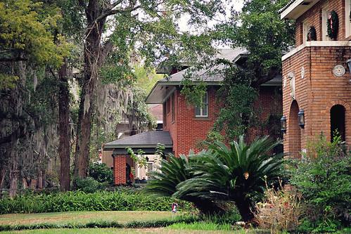 trees houses yards florida neighborhood spanishmoss jacksonville lawns