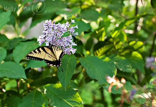 monarch-1