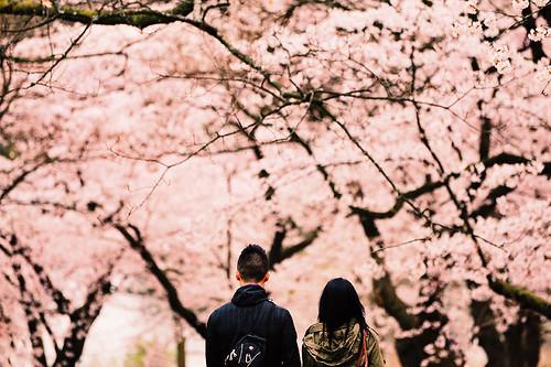 [フリー画像素材] 人物, カップル, 桜・サクラ, 人物 - 花・植物, 人物 - 後ろ姿 ID:201204300600