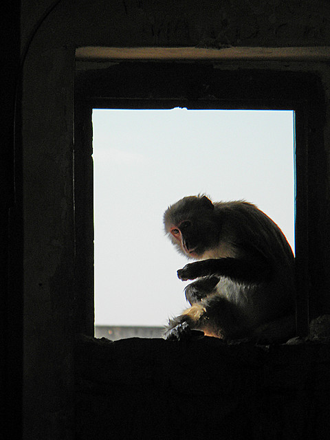 monkey in a window at Bundi Fort