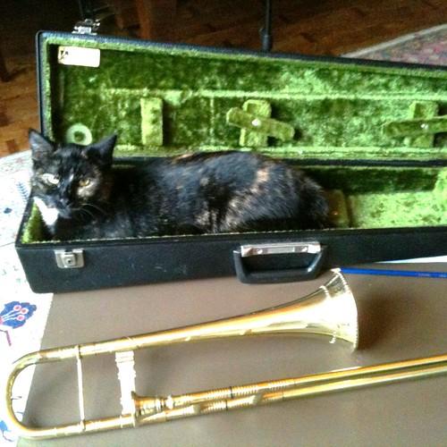 trombone player's cat