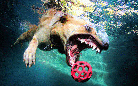 Water Sharks... err... Dogs! 7129253099_6f7f65b7ca_z