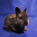Baby bunny, 17 days old by Amy M. Youngs