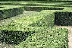 shrub, soil, plant, maze, green, hedge, rural area,