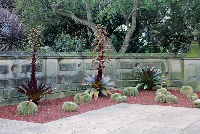 Cactus planters at the Botanic Gardens