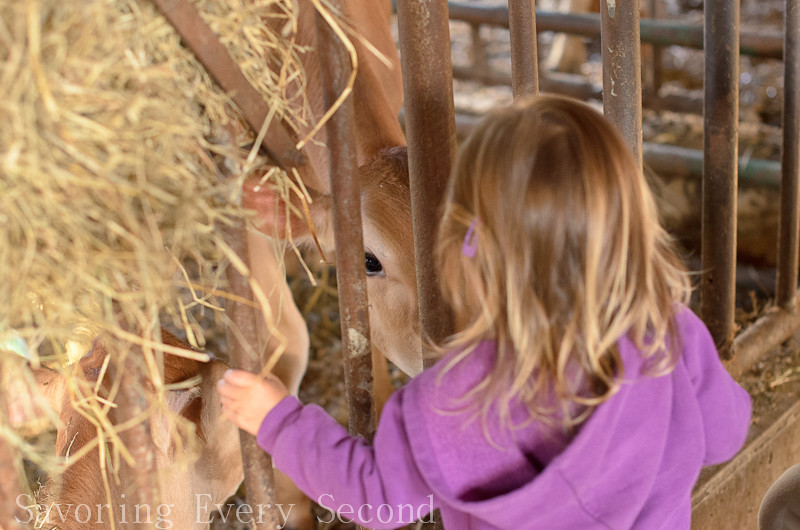 Hillside Farms-009.jpg