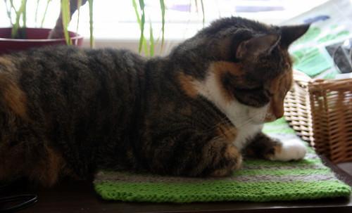 Kittiemat