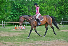 English riding, Trot