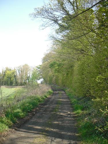 Country Path Again