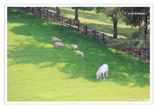 鞍ヶ池公園(豊田市)の牧場