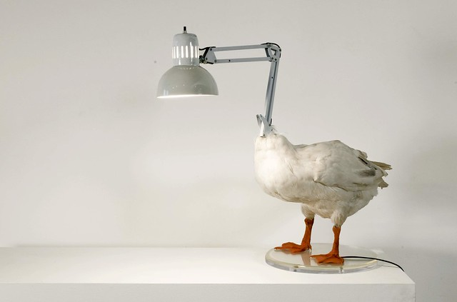 56_duck-lamp-high-1-z